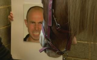 Ils seraient capables de comprendre 17 émotions : les chevaux sensibles à l'humeur des hommes