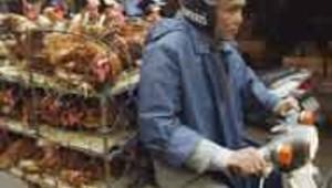 grippe aviaire poulets poules moto vietnam AFP
