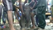 Les images du sauvetage d'un éléphanteau tombé dans un égout