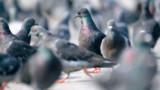"""Budget 2013 :les entrepreneurs ne veulent pas être pris pour des """"pigeons"""""""