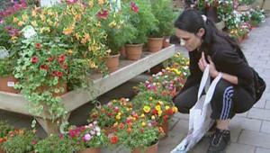 Dans une jardinerie