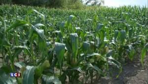 """Les OGM """"cachés"""", déjà cultivés en France et bientôt dans vos assiettes"""