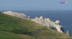 Le 13 heures du 21 août 2014 : Iles anglo-normandes : Aurigny, le paradis des oiseaux migrateurs - 1880.8892313842778