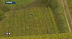 Vin : la météo de la rentrée a sauvé les récoltes