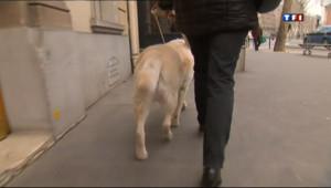 Le 20 heures du 6 avril 2013 : Des malvoyants%u2026 et leurs chiens victimes de discrimination - 1326.4859999999999