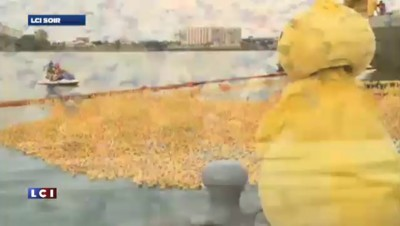 L'image du soir : des canards en plastique pour la bonne cause !