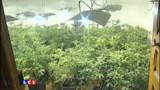 Saisie record : plus de 3000 pieds de cannabis découverts dans l'Aube