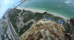 Découvrez Dubaï à dos de faucon !