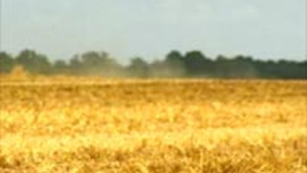 agriculture champ paille sécheresse
