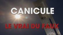 Canicule VRAI/FAUX
