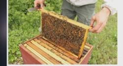 """""""Un toit pour les abeilles"""" : parrainez une ruche contre des pots de miel (08/10)"""