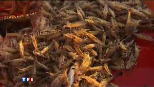 Vos crevettes pourraient venir d'une entreprise esclavagiste