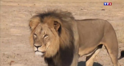 Le 20 heures du 29 juillet 2015 : Zimbabwe : après avoir abattu le lion Cecil, ils comparaissent devant la justice - 1236