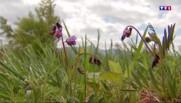 Vosges : randonnée et salade d'orties au menu