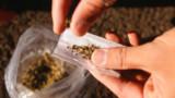 Strasbourg: un réseau de trafic de drogue démantelé