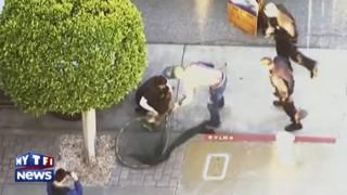 Des bébés otaries dans les rues de San Francisco