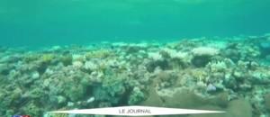 Australie : la Grande barrière de corail, joyaux de l'humanité, est en danger