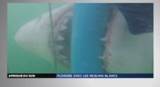 ZAPNET. Requin Afrique du sud (03/07)