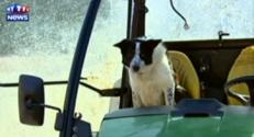 chien don tracteur ecosse