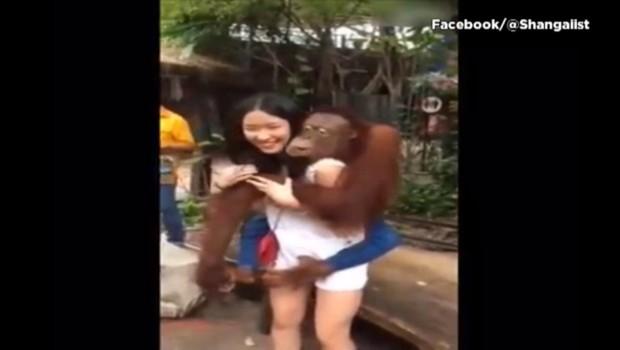 Pris en photo, ce singe se prend d'affection pour une touriste chinoise et l'embrasse