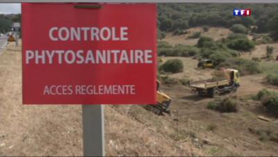 "Le 20 heures du 1 août 2015 : Corse : la propagation de la bactérie "" Xylella fastidiosa"" continue - 1207"