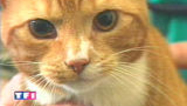 chat félin matou TF1