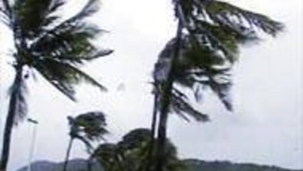 Dina cyclone palmierd