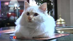 Un chat, résident à l'année dans un grand hôtel parisien