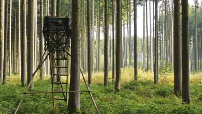 Chasse chasseur illustration forêt