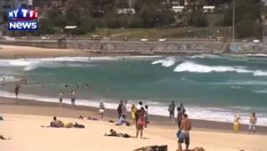Un requin blanc repêché mort dans la baie de Sydney