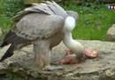 Balade dans la Dombes : Villars-les-Dombes, un paradis pour les oiseaux