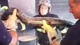 Un python... dans le plafond