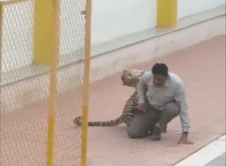 Inde : un léopard sème la panique en s'introduisant dans une école