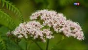 Le 20 heures du 1 juillet 2015 : De la plante au traitement, les secrets de la médecine douce - 1878