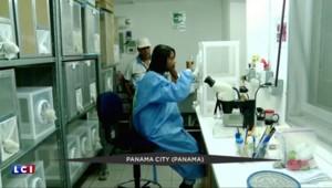 Virus Zika : un vaccin mis au point par un laboratoire indien ?