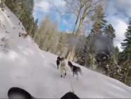 Le 20 heures du 1 mars 2015 : La France aux championnats du monde de vitesse … des chiens de traineau - 2127.1895957031247
