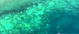Son blanchissement inquiète : la Grande barrière de corail en Australie vue du ciel