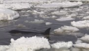 orques sauvetage russie