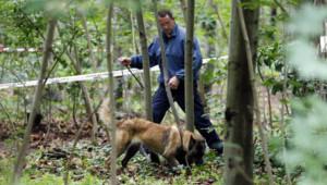 Restes humains du bois de Vincennes : enquêteurs cherchant dans les fourrés à l'aide d'un chien (18 juin 2012)