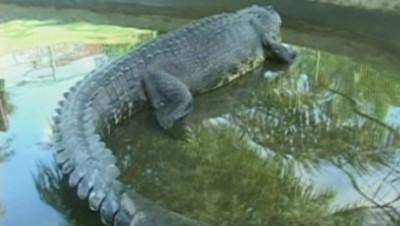 Un crocodile (archives).
