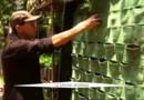 Mexico érige des murs verts anti-pollution