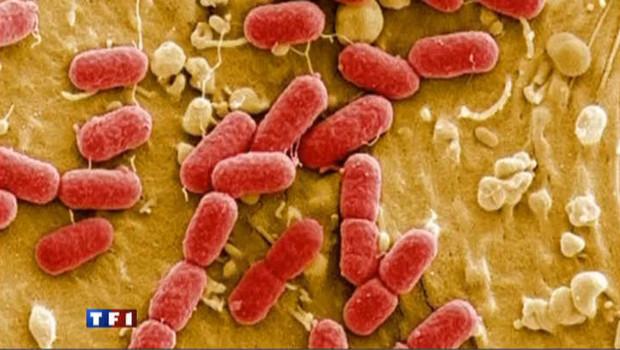 Concombres contaminés : la bactérie en cause est très rare