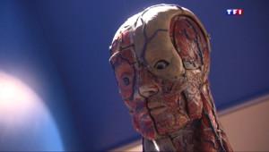 Le 20 heures du 12 avril 2015 : Les écorchés d'anatomie, ces mannequins normands prisés dans le monde - 1544.546