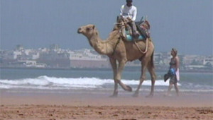 Chameau Essaouira tourisme Maroc mer