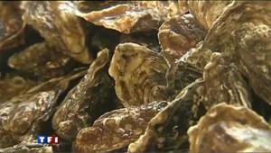Les huîtres, un met convoité...