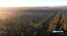 Le 20 heures du 25 octobre 2014 : Zoom sur Broc�ande : petit aper�d%u2019une for�mythique - 1410.7809999999997