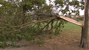 Une branche d'arbre arrachée à Toulouse (Haute-Garonne) en raison des vents violents qui se sont abattus sur la région, le 19/10/12.