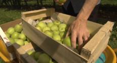 Le 13 heures du 18 septembre 2014 : Et si vous veniez cueillir vous-m�s vos pommes ? - 2061.0520000000006