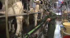 Le 13 heures du 31 mars 2015 : Nés il y a trente ans, c'est la fin des quotas laitiers - 1062.458