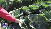 Japon : le mont Aso entre en éruption